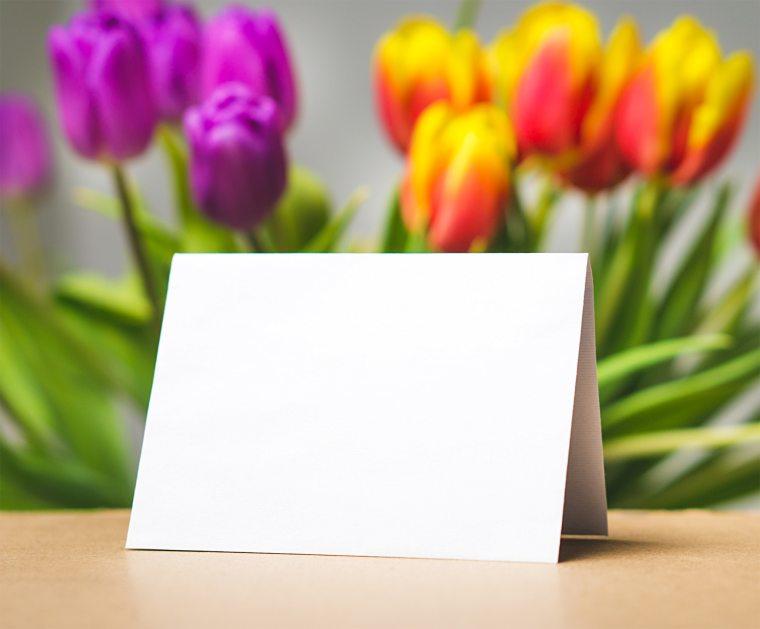 beautiful-blank-blooming-356548